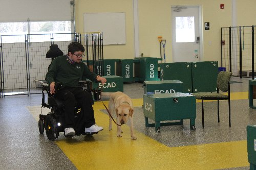 Quincy man completes service dog training as industry opens back up
