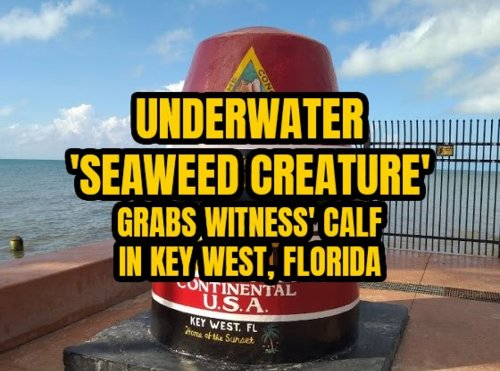 Underwater 'Seaweed Creature' Grabs Witness' Calf in Key West, Florida