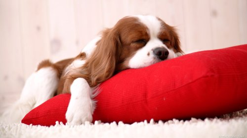 6 Best Dog Friendly Hotels in Ireland