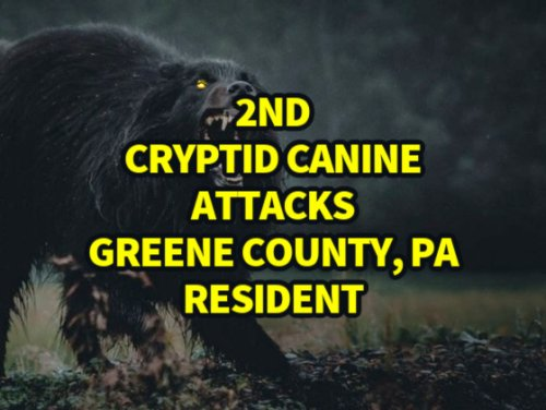 2nd Cryptid Canine Attacks Greene County, PA Resident