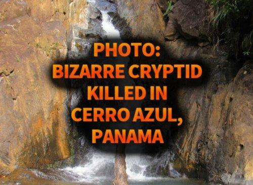 Photo: Bizarre Cryptid Killed in Cerro Azul, Panama
