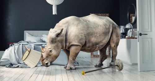 8 einfache Hausmittel, mit denen Sie ein Nashorn aus Ihrer Wohnung bekommen