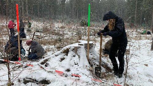 Versuchslabor im Fichtelgebirge: Test mit 1.000 Bäumen