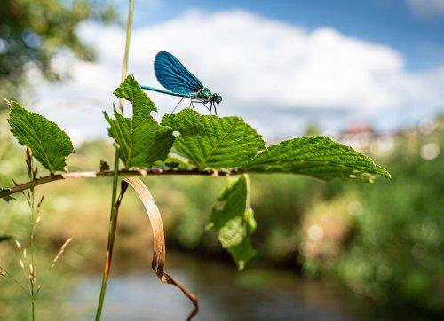 Mit Gewässerrandstreifen für mehr Artenvielfalt