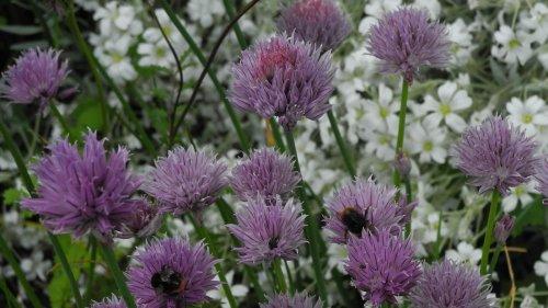 Vielfalt im Garten: Kost und Logis für Insekten und Tiere