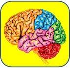 le cerveau au programme cover image