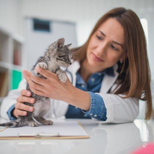 Corona: Kann ich mein Haustier impfen lassen? | BRAVO