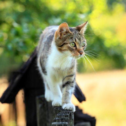 Katzen: So gefährlich ist es, sie draußen laufen zu lassen! | BRAVO