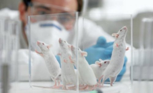 Japanese scientists mailed dried mouse sperm