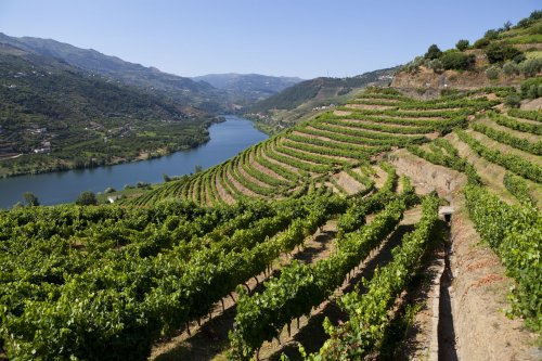 Why Every Wine Lover Needs to Visit Douro Valley, Portugal