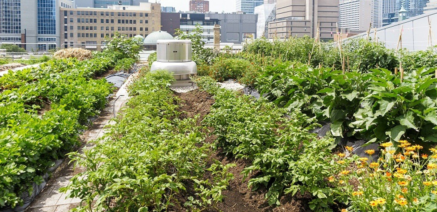 Green Roof Requirements Are On the Rise