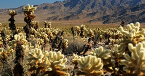 The 14 best desert hikes in Southern California