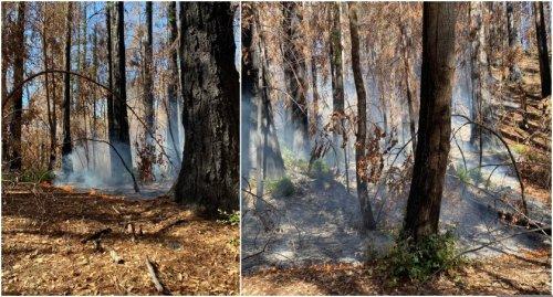 Crews to mop up 11.75-acre Sandy Fire in CZU Lightning Complex burn scar Tuesday