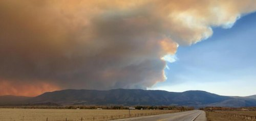 Wildfires Can Still Impact Wildlife Hundreds Of Miles Away