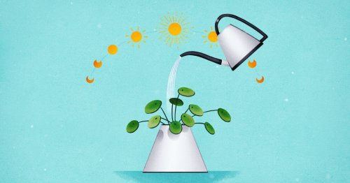 The best time of day to water your plants is when it's easy for you