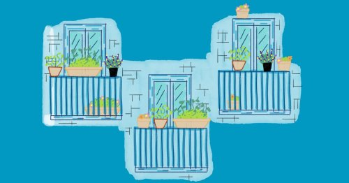 5 tips for growing herbs on your balcony, or anywhere else that gets sun