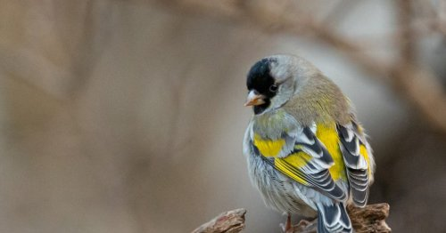 Adding these 13 plants, not bird feeders, could save the birds