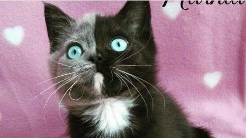 Schaut mal, wie dieses Katzenbaby heute aussieht!