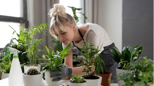 Trockene Heizungsluft: So schaffen es deine Zimmerpflanzen durch den Winter