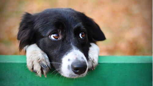 """Hund erkennt """"zu dünnen"""" Besitzer nicht mehr"""