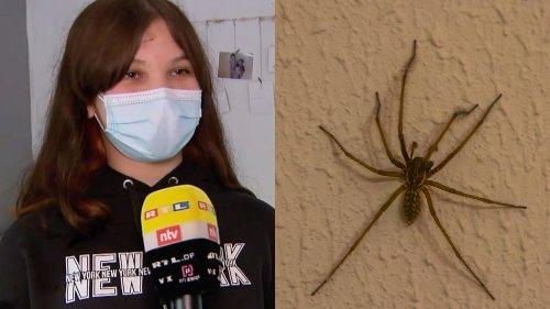 """Polizeieinsatz nach Spinnen-Sichtung: """"Auf einmal seh ich da so ein dickes, schwarzes Ding!"""""""