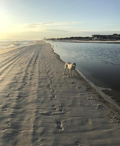 10 Pet-Friendly Rentals With Private Beaches