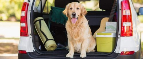 Dog Friendly South Carolina