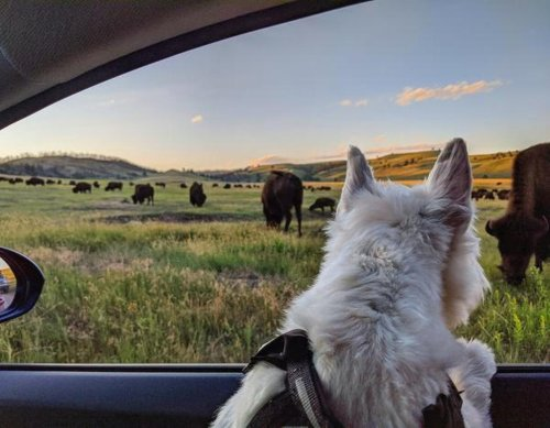 Fido's Wild Ride: The Best Wildlife Drives in the U.S.