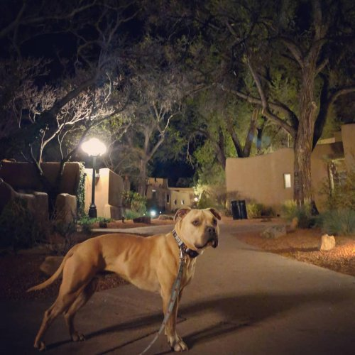 Bring Fido (If You Dare) to These Seven Dog-Friendly Haunted Hotels