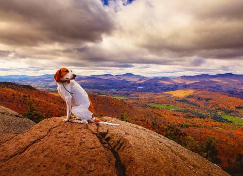 10 Stunning Hikes to Experience Fall With Fido