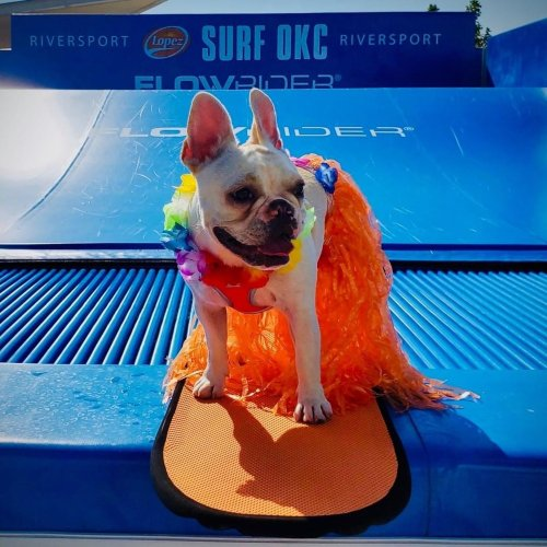 Cool Off With Fido During the Dog Days of Summer