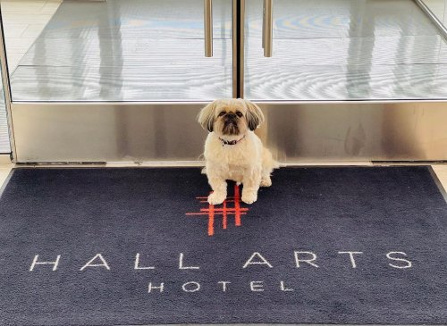 New Pet-Friendly Hotels: August 2021