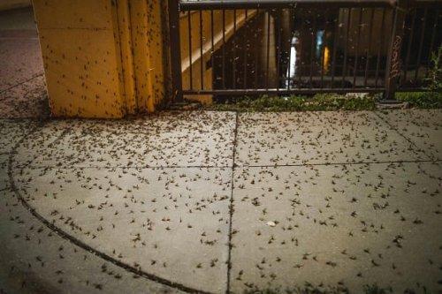 It's mayfly season in Minnesota, and it's totally gross