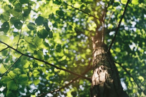 Afton resident offers $1,000 reward for information surrounding recent tree cutting incident