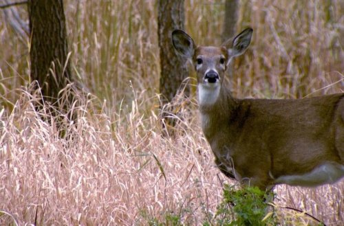 Minnesota DNR unveils what deer hunters can expect this season