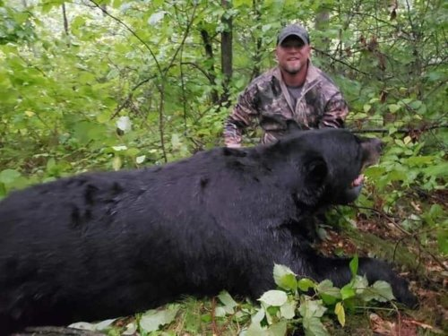 Man who illegally killed, decapitated 700-pound bear gets prison