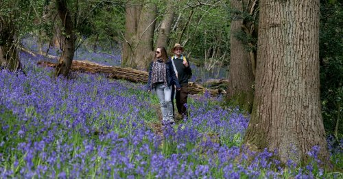 The best woodland bluebell walks in and around Bristol this spring