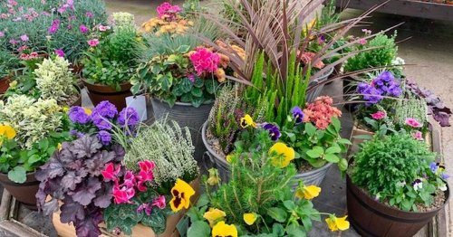 Autumn is the season for green fingers