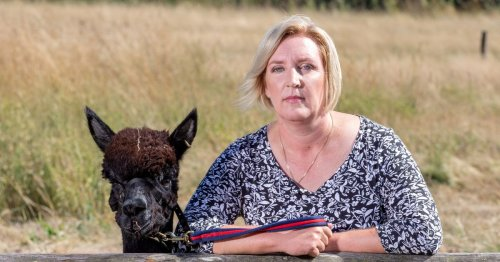 Farmer told her beloved alpaca could be killed from today