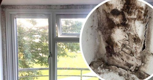 Family on benefits 'distressed' by home 'riddled with mould'