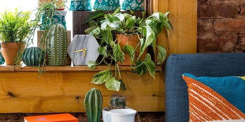 13 Unexpected Ways to Decorate With Plants