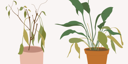 A Yellow Leaf Does Not Mean Your Plant Is Dead (and Other Health Tips)