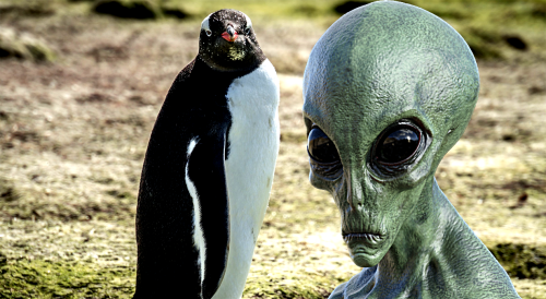 Wild discovery leads scientists to claim penguins could be aliens
