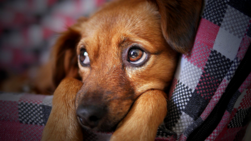 Science Proves Dogs, Unlike Kids, Will Ignore You If They Know You Are Lying To Them