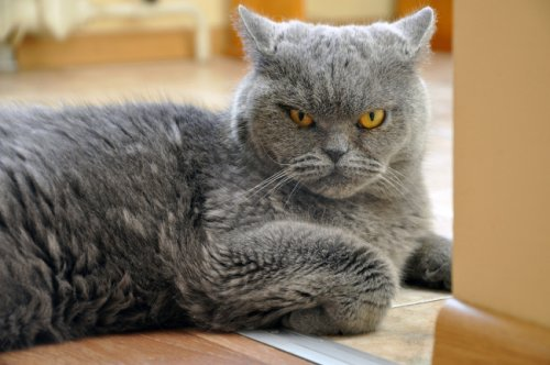 Science Proves What Everyone Already Knew: Cats Are Disloyal Scuzzballs