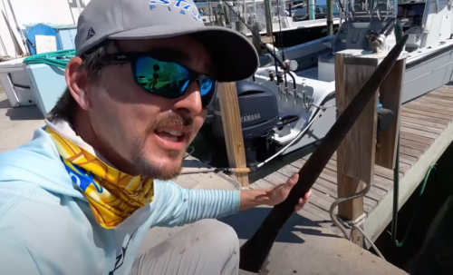 Captain Finds Rare Lancetfish Inside Of A Swordfish Belly And It Legit Looks Like A Sea Dragon