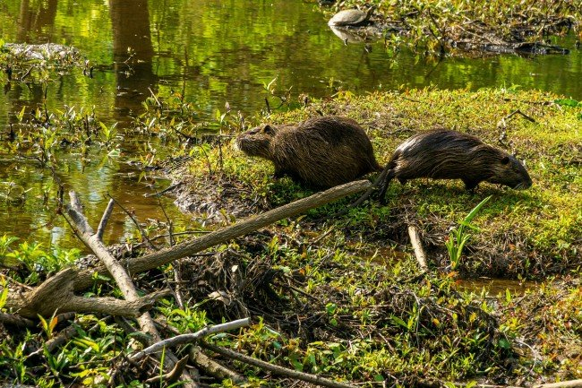 A 'Swarm Of Swamp Rats' Took Over A Park In Texas Because 2020 Truly Has Zero Chill