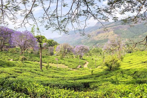Exploring Munnar and Neriamangalam, Kerala with Windermere Retreats - Brogan Abroad