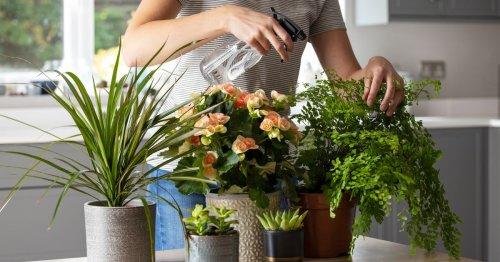 Getestet: Mit diesem Trick rettest du jede Zimmerpflanze