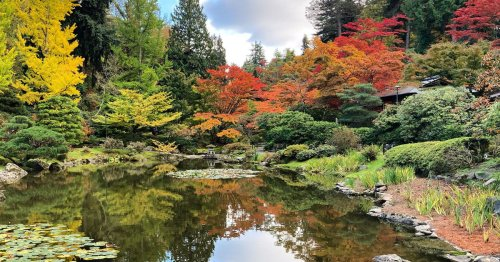 Visit the 6 most stunning Japanese gardens in America | Budget Travel